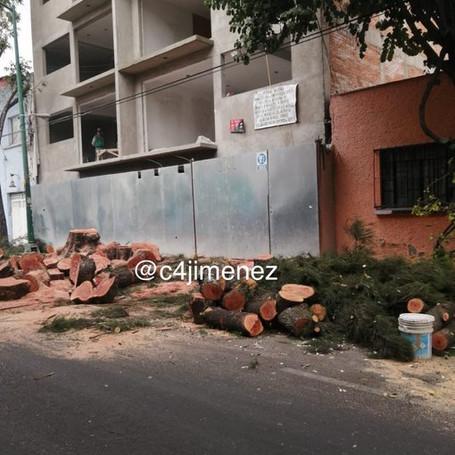 Por derribar árboles sin permiso, detienen a sujeto que se ostentaba como trabajador de la SEDEMA
