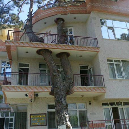 Nueve beneficios de los árboles