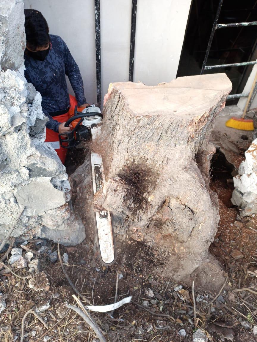 Derribo de árboles