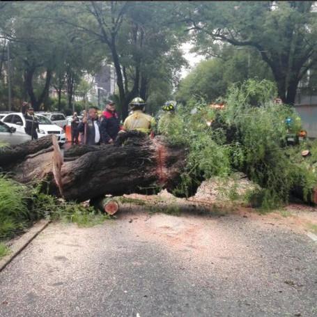 Lluvia deja saldo de seis árboles caídos en la CDMX