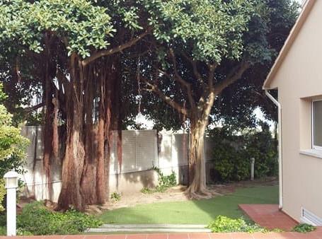 ¿Sabías que puedes solicitar la poda del árbol de tu vecino si este se extiende sobre tu propiedad?