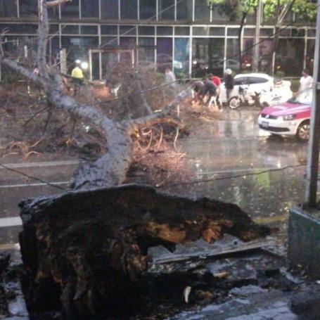 Lluvia provoca caída de un árbol en la alcaldía Miguel Hidalgo.