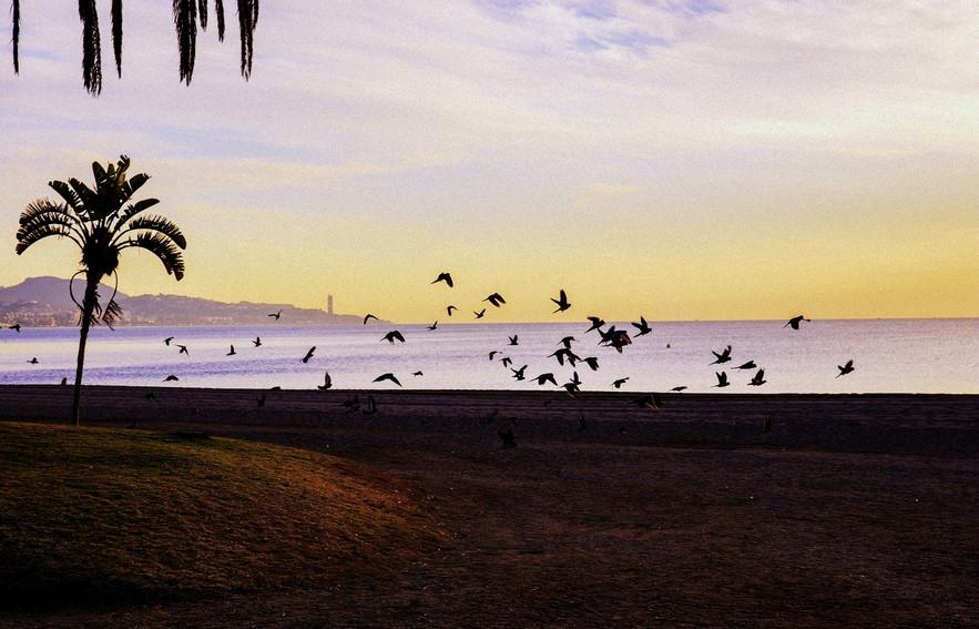 andalusia-costa-del-sol-beach-malaga-pal