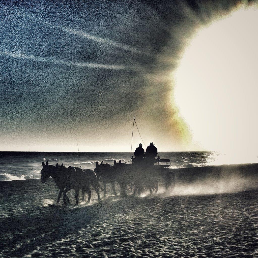 andalusia-costa-del-sol-beach-horses-wag