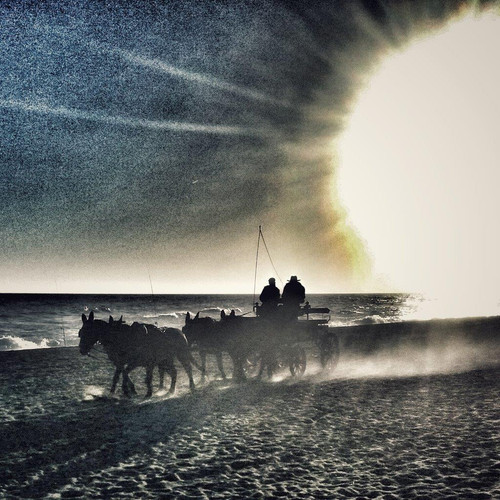 andalusia-costa-del-sol-beach-horses-wag