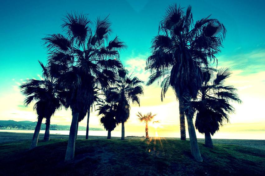 andalusia-costa-del-sol-beach-palm-trees