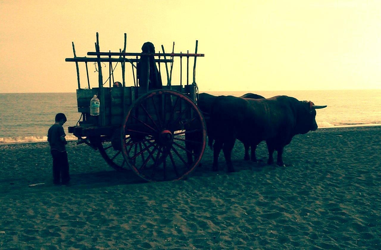 andalusia-costa-del-sol-beach-bulls-wagg