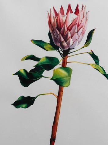 flower (2).jpeg