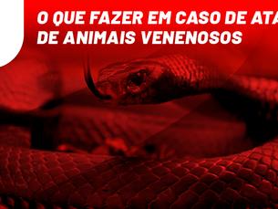 O que fazer em caso de ataque de animais venenosos