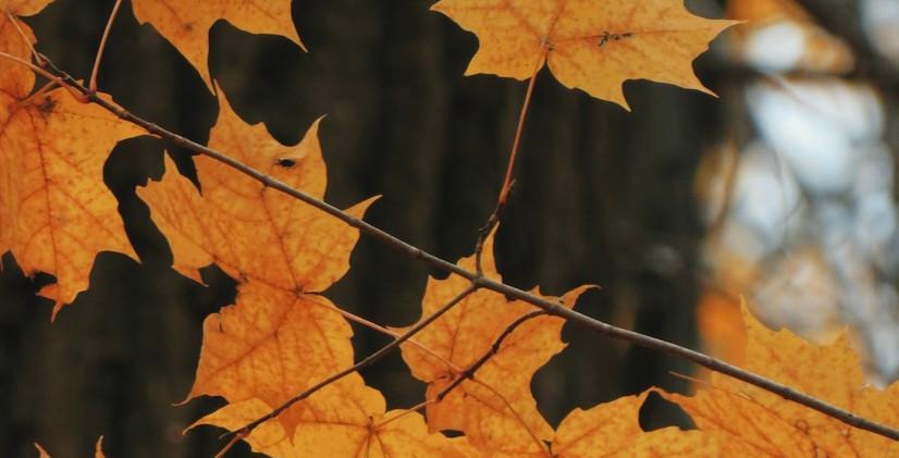 Fall 2.jpeg