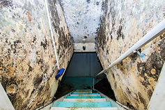 img710_mouldy_staircase.jpg