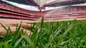 Um sonho chamado Benfica.