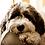 Thumbnail: Agenda 2021 - Honden