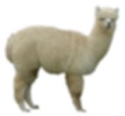 alpaca_InPixio.png
