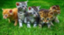 kittens-2641211_1920.jpg