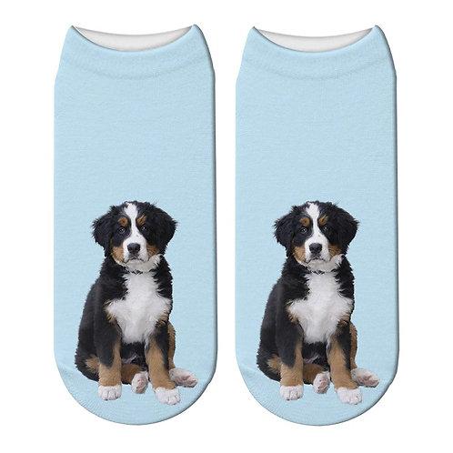 Berner Sennenhond puppy print sokken