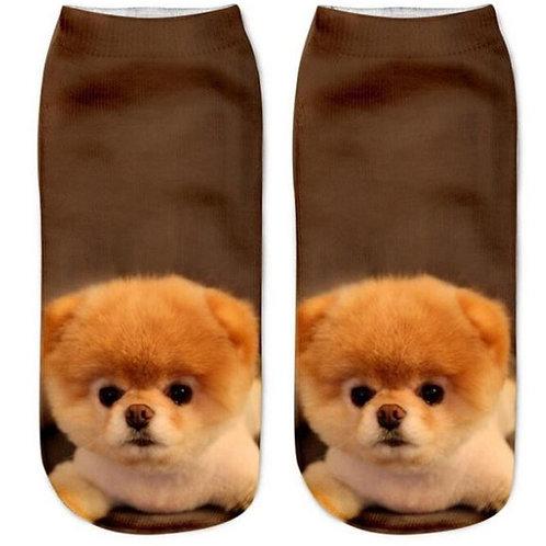 Pomeranian puppy print sokken