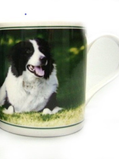 Mok Border Collie