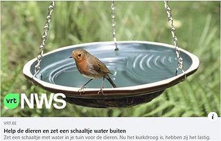 Help vogels.JPG