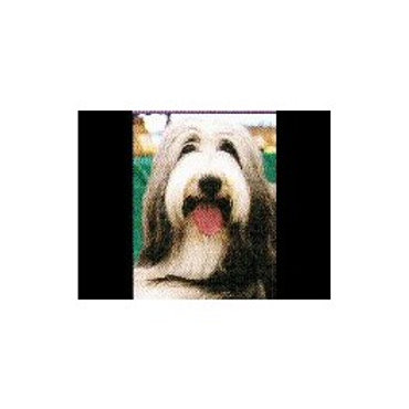 Bearded Collie Magnetisch notitieblok