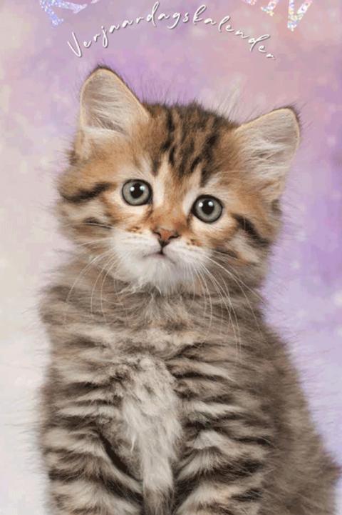 Verjaardagskalender - Katten