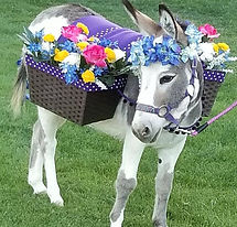 dinky-donkey-adventures-az-half-ass-adve