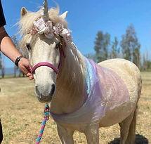 tickle-me-pony-half-ass-adventures.jpg