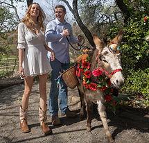 half-ass-adventures-wedding-donkeys-0471