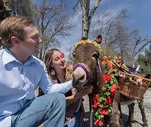 half-ass-adventures-wedding-donkeys-0405
