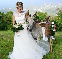island-bliss-donkeys-virgin-islands-half
