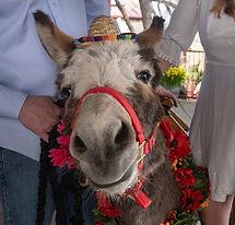 half-ass-adventures-wedding-donkeys-0447