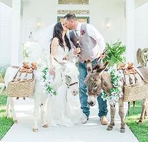 wedding-donkeys-beer-burros-fla-half-ass