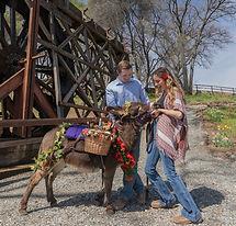 half-ass-adventures-wedding-donkeys-0396