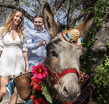 half-ass-adventures-wedding-donkeys-0470