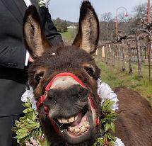 half-ass-adventures-beer-burros-05220.jp