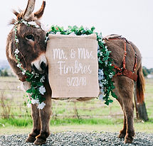little-burro-events-half-ass-adventures.