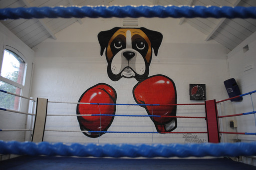 Boxer Dog.