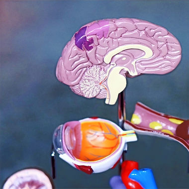 brain%25252520illustration_edited_edited_edited_edited.jpg