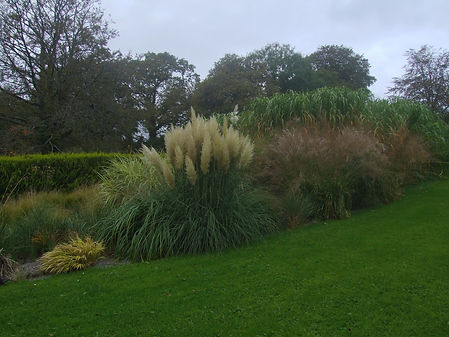 Grass beds in October