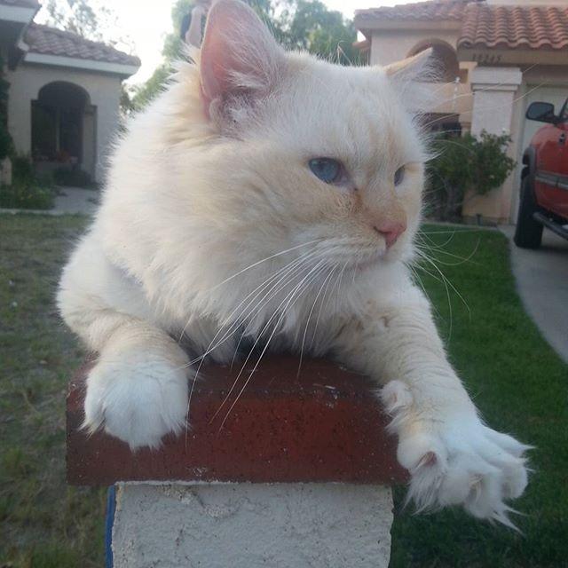 flame kitten's #catsofinstagram #hellokitty #catsoftheworld #cuteanimals #floppycats #
