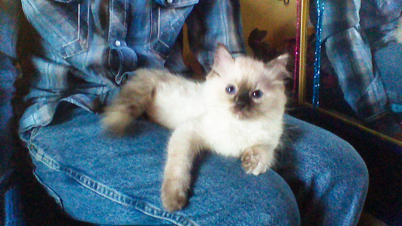 9-27-14 Kittens Shenandoah - Brendon