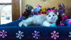 09-10-14 Kittens Bailey - Brendon