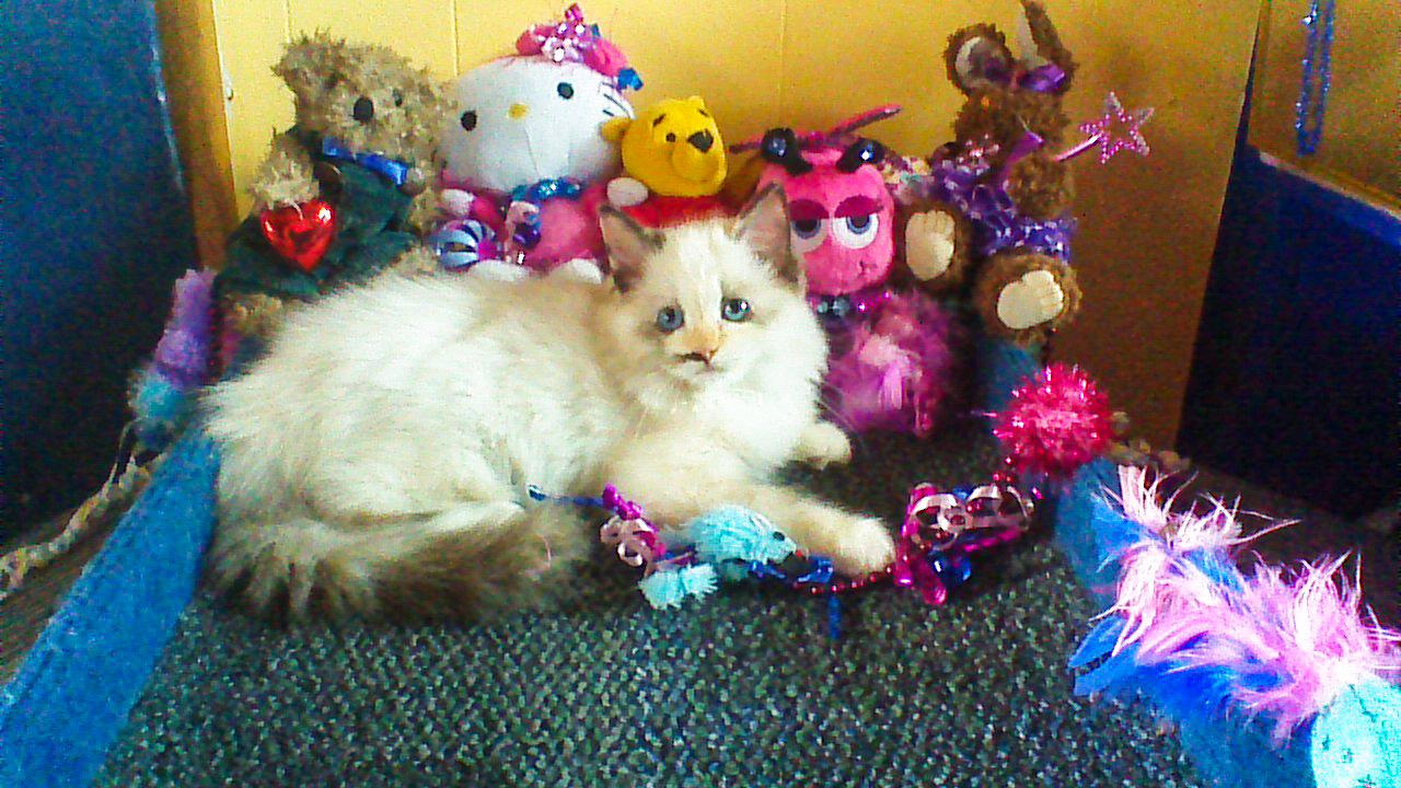 09-27-14 Kittens Bailey - Brendon