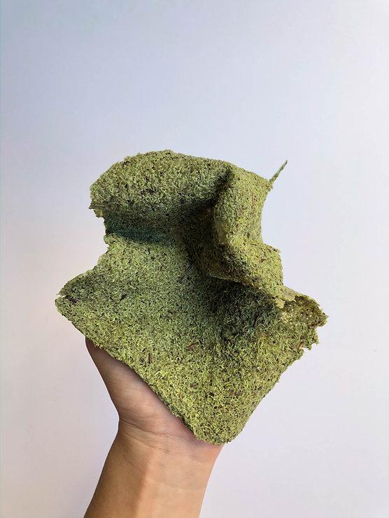 Bioplástico de liquen.jpg
