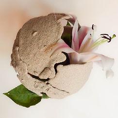 lily eggshell1.jpg