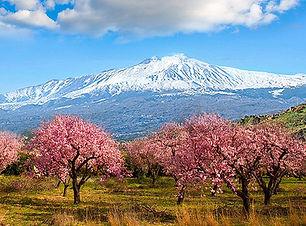 mandelblüten_agrigento.jpg