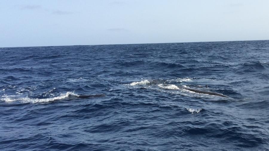 Ámbrás cetek a hajó körül