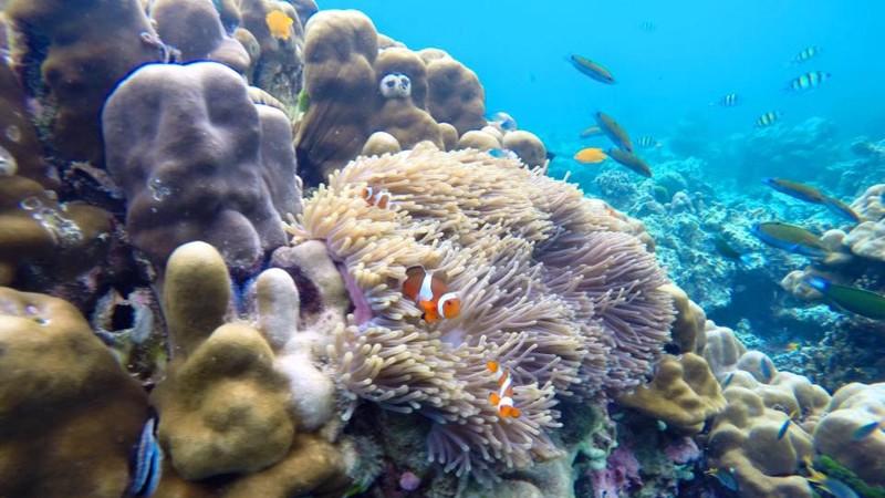 A korallzátony élővilága Ko Roknál