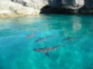 shark-nursery.JPG