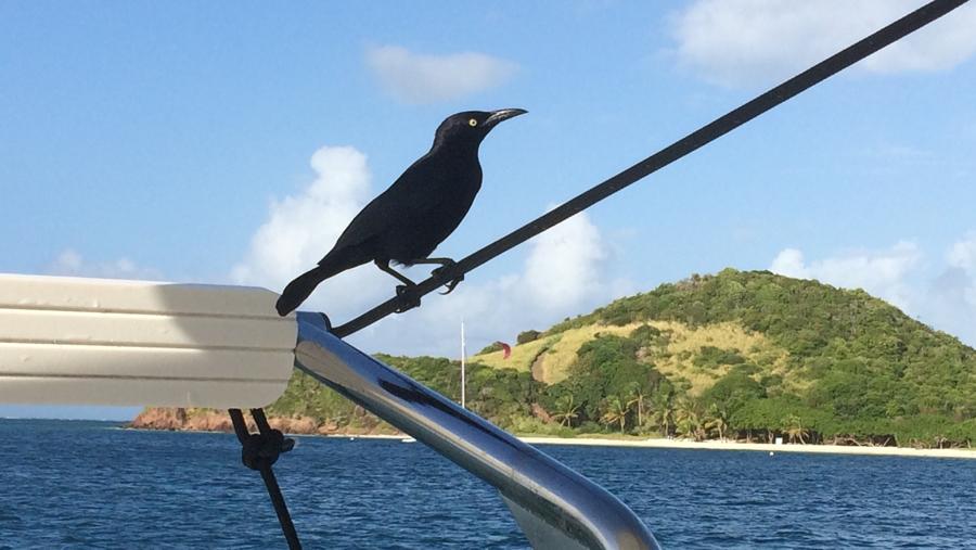 Látogató a fedélzeten